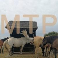 Mtp ponies SQ