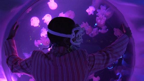 Loving Aquarium