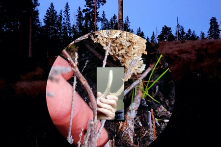Elg Post Birch LORES