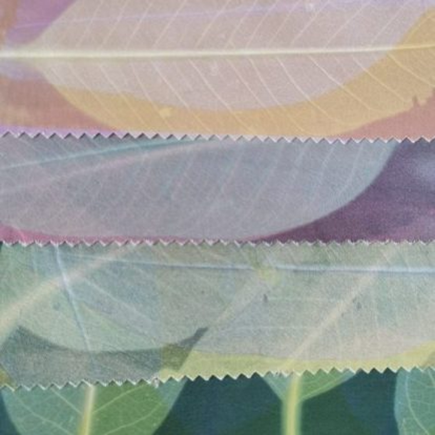 Mono and transfer printing workshop transfer printed leaves by clarissa ready 2021 edited 4