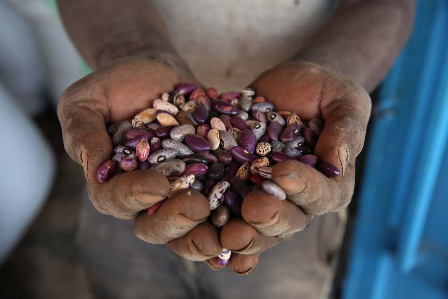 Seeds in Hand